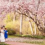 Bride's entrance in spring garden, Procopio Photography