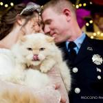 Bride and groom with Romeow, Procopio Photogrpahy