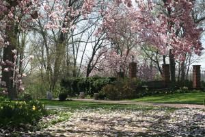 April 4, 2010 magnolia carpet excellent