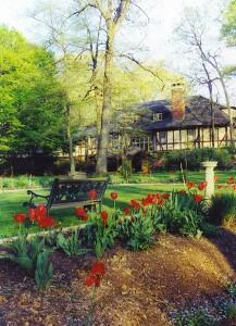 Front Tulips April garden