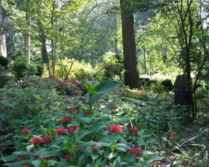 Gardens Lower Path 2