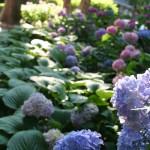 Gramercy Mansion Garden