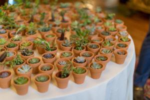 Succulent Guest Favors | Gramercy Mansion