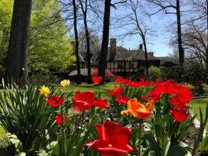 Maryland gardens in the spring with red and orange tulip flowers.
